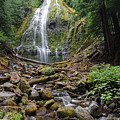 Forest Adventuring by Margaret Pitcher