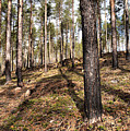 Forest Next Summer After A Fire by Jouko Lehto