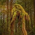 Forest Alien by Bill Posner