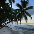 Forest Beach 2 by Michael Scott