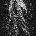 Forest Botanicals In Black And White by Debra and Dave Vanderlaan