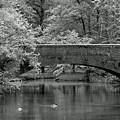 Forest Bridge by Ann Keisling