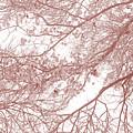 Forest Canopy by Az Jackson