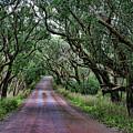 Forest Corridor by Douglas Barnard