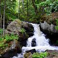 Forest Creek by Gunnar Lundquist