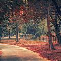Forest by Daniyal Malik