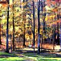 Forest Deck by Shirley Dawson