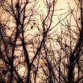 Forest Dreams by Bob Orsillo