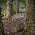 Forest Feet by Jon Woodbury