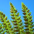 Forest Ferns Art Prints Blue Sky Botanical Baslee Troutman by Baslee Troutman