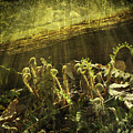 Forest Ferns Unfurling by Sari Sauls
