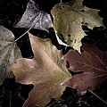 Forest Floor - Leaf 2 by Pete Hellmann