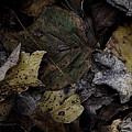 Forest Floor - Leaf 7 by Pete Hellmann