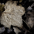 Forest Floor - Leaf 8 by Pete Hellmann