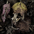 Forest Floor - Leaf 9 by Pete Hellmann