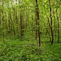 Forest Floor by DeeLon Merritt