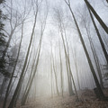 Forest Fog by Bill Wakeley