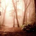Forest Fog by Goran Vucicevic