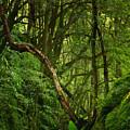 Forest by Gaspar Avila
