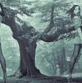 Forest Harmony by Colette V Hera Guggenheim