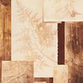 Forest Imprints by Pam Smyth