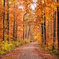 Forest In Autumn Nature Park Schoenbuch Germany by Matthias Hauser