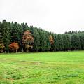 Forest In Bavaria by Jesus Fernandez