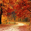 Forest In The Fall by Autumn Scenes