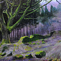 Forest In Wales by Harry Robertson