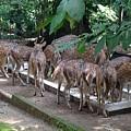 Forest Inspection Bungalow  by Aysha neha Naushad