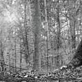 Forest by Irina Martjanova