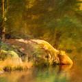 Forest Lake Impression by Lutz Baar