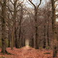Forest Lane Near Maarsbergen by Tim Abeln