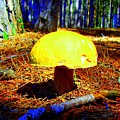 Forest Life by Jolanta Anna Karolska