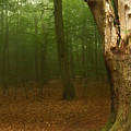 Forest Light 1 by Heike Hultsch