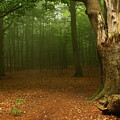 Forest Light 2 by Heike Hultsch