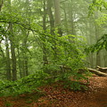Forest Light 3 by Heike Hultsch