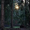 Forest Magic 7 by Angelika Heidemann