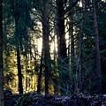 Forest Magic 8 by Angelika Heidemann