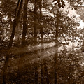 Forest Mist B And W by Steve Gadomski