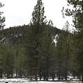Forest Mountain Redux by Dan Hassett