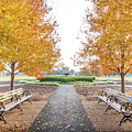 Forest Park Benches by Steven Jones