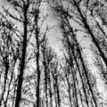 Forest Pastel  by David Pyatt