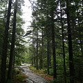 Forest Path At Grafton Notch State Park by Neal Eslinger