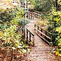 Forest Path by Cindy Gacha