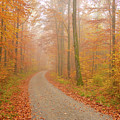 Forest Path In Fall by Matthias Hauser