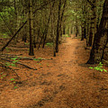 Forest Pathways 3 by Roger Monahan