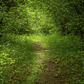Forest Pathways 4 by Roger Monahan