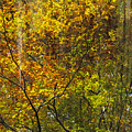Forest Pattern by Yuri Santin