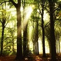 Forest Rays by Andrea Otte